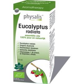 Physalis Eucalyptus radiata (Eucalyptus radiata) 10ml